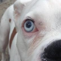 canine eye egg truncated icosahedral