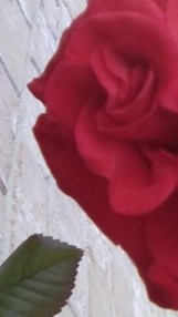 rose half face