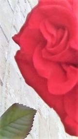 rose half face light